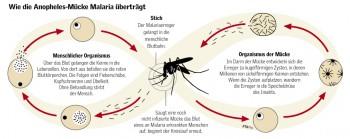 Malaria-Übertragung durch Anopheles-Mücke