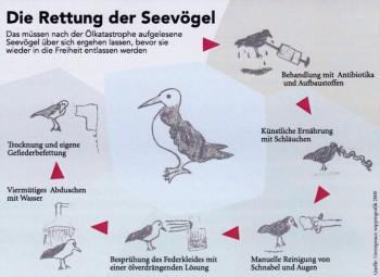Behandlung geretteter Seevögel nach einer Ölkatastrophe